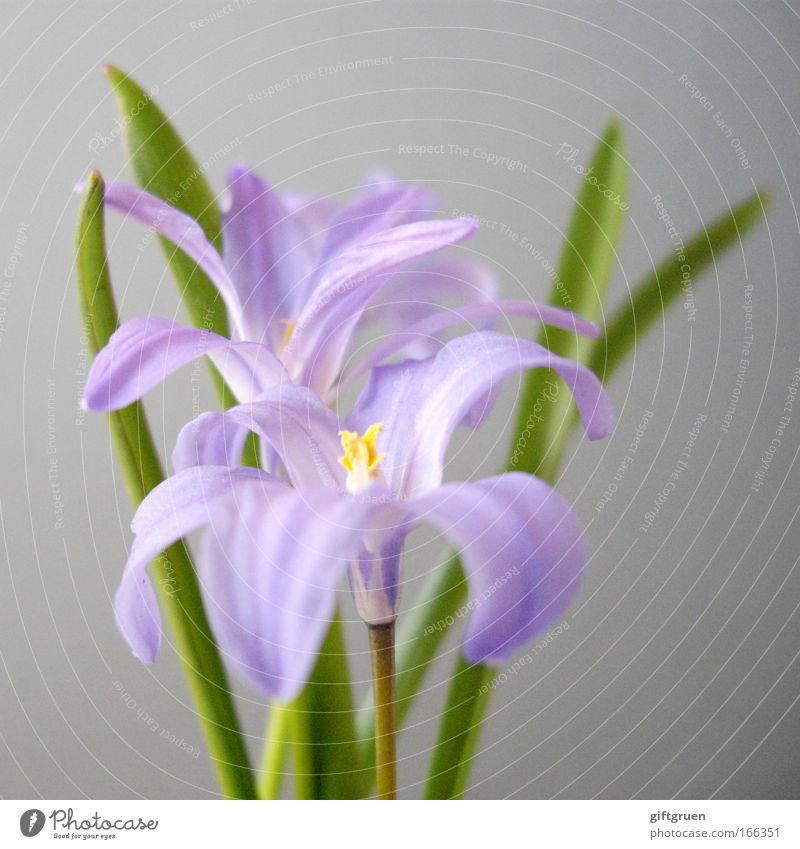"""""""never trust a woman who wears mauve"""" Farbfoto Menschenleer Schwache Tiefenschärfe Natur Pflanze Frühling Blume Blüte Wiese Blumenstrauß Blühend Wachstum schön"""