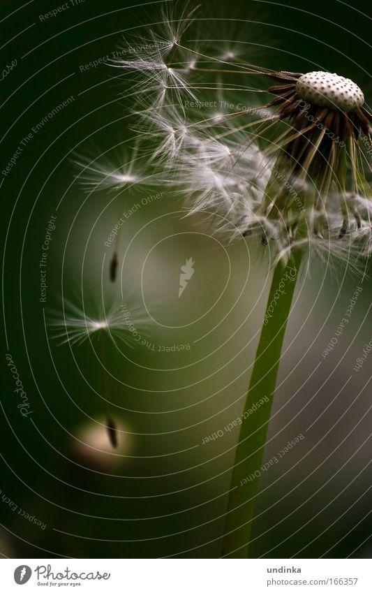 Losgelöst Blume grün Pflanze Frühling fliegen Schweben Zusammenhalt verblüht Nordlicht