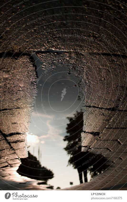 [HH 09.4/3] du pfannkuchen essen - ich pfütze fotografieren Himmel Wasser blau Baum Sonne schwarz Einsamkeit Ferne Straße Umwelt Stein träumen braun