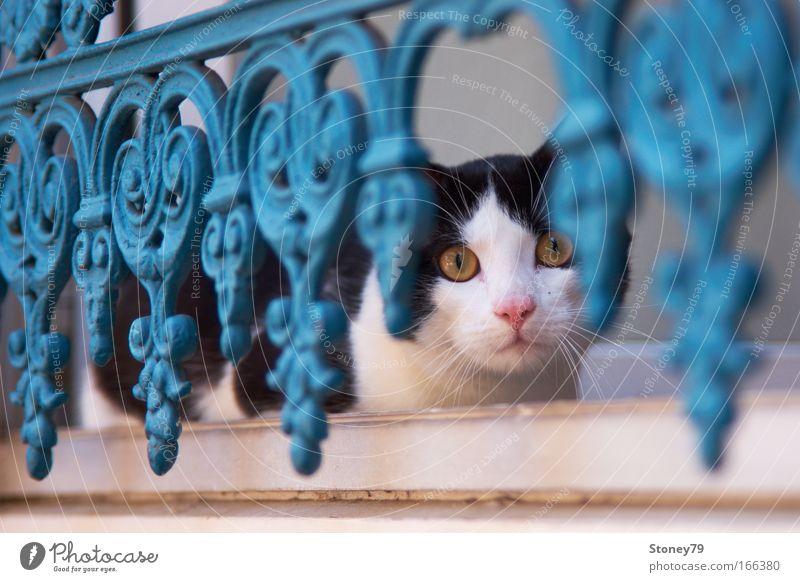 Angst & Neugier Tier Katze Metall sitzen Sicherheit Tiergesicht Schutz beobachten Wachsamkeit Haustier Interesse Schüchternheit Vorsicht Ornament