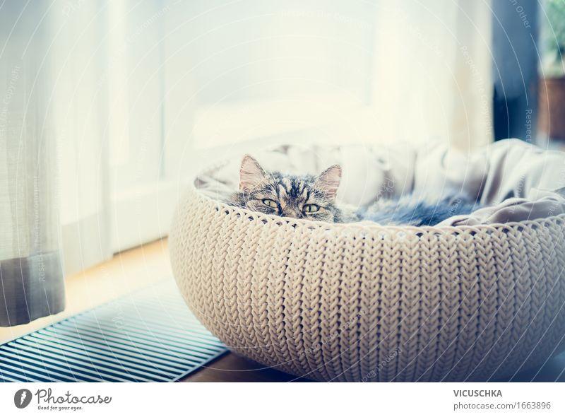 Süße lustige Katze in Katzenkorb Lifestyle Häusliches Leben Wohnung Raum Tier Haustier 1 weich Design Korb Jagd Fenster Blick in die Kamera Tierliebe Farbfoto