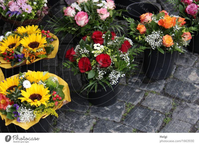 AST 9 | nimm Blumen mit... Frühling Rose Sonnenblume Blumenstrauß Dekoration & Verzierung Blumentopf Kopfsteinpflaster Stein stehen ästhetisch frisch schön