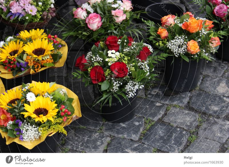 AST 9 | nimm Blumen mit... schön Frühling grau Feste & Feiern Stein Dekoration & Verzierung frisch ästhetisch Geburtstag stehen Kreativität einzigartig