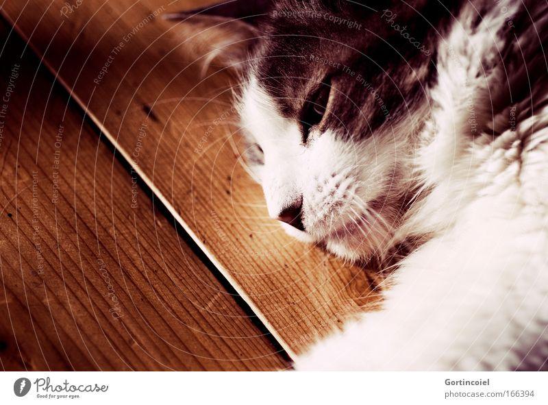 Silence Katze weiß Tier schwarz ruhig Auge grau träumen Stimmung Zufriedenheit liegen schlafen Boden weich Fell Tiergesicht