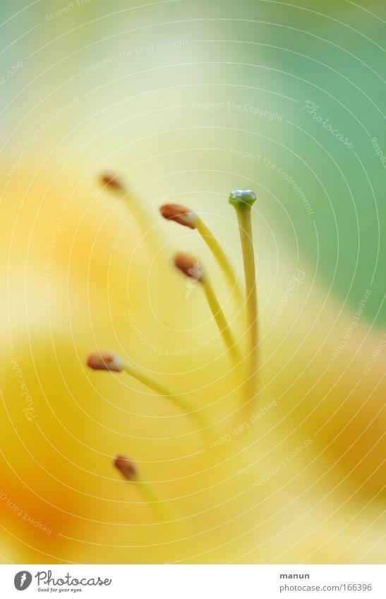 Azalea I Natur Blume grün Pflanze Sommer gelb Farbe Erholung Blüte Frühling hell Stimmung elegant frisch ästhetisch außergewöhnlich