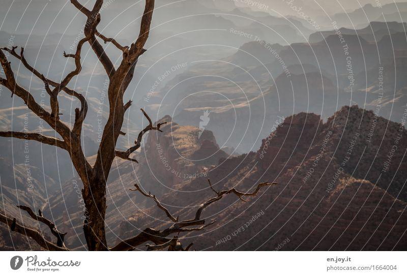 vor langer Zeit Ferien & Urlaub & Reisen Natur Landschaft Klima Klimawandel Baum Schlucht Grand Canyon Wüste braun Tod Abenteuer Verfall Vergänglichkeit
