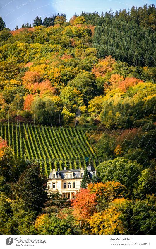 Schloß mit viel Herbst Natur Ferien & Urlaub & Reisen schön Landschaft Ferne Berge u. Gebirge Reisefotografie Umwelt Freiheit Tourismus Zufriedenheit Feld
