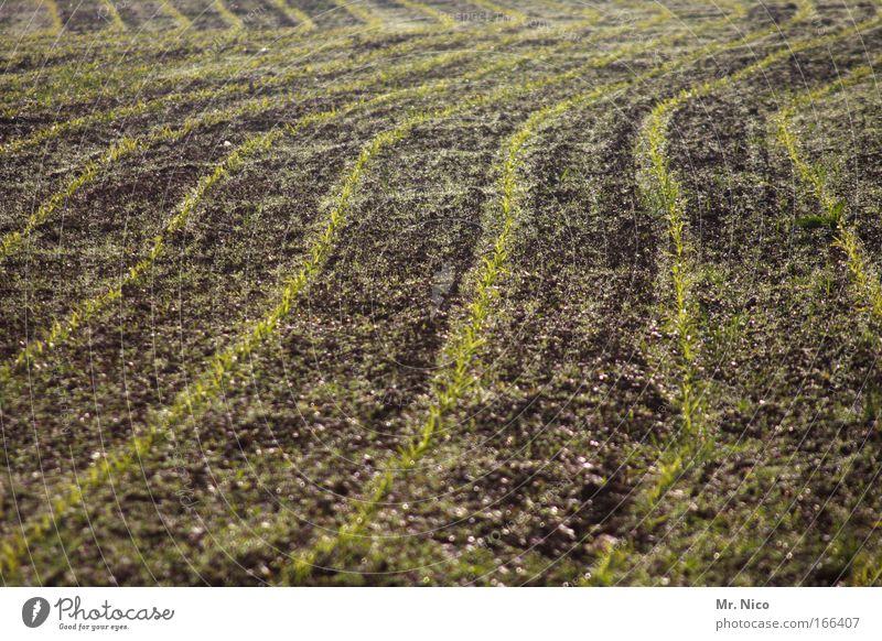 saat gut Natur Pflanze Linie braun Feld Erde Wachstum Spuren Landwirtschaft Ackerbau ökologisch Furche Biologische Landwirtschaft krumm Aussaat Saatgut