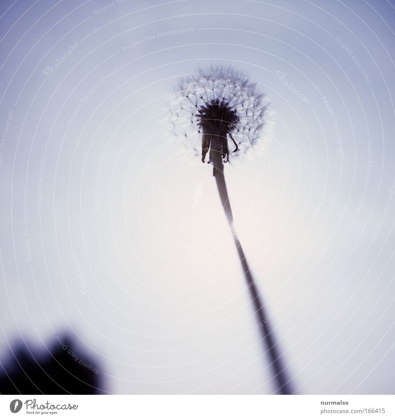 war mal Löwenzahn Natur Pflanze Freude Tier Wiese Glück Blüte Feld Wind Wachstum Lächeln einfach genießen Lebensfreude Bioprodukte