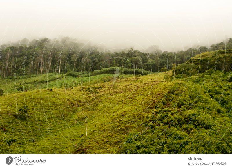 Regenwald Abholzung Natur Baum grün Pflanze Wald Gras Nebel Wetter Morgen Umwelt groß Schutz Hügel Urwald Berge u. Gebirge Hölle