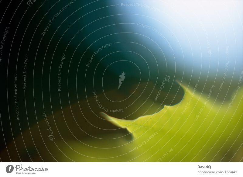 Randstruktur Farbfoto Außenaufnahme Nahaufnahme Detailaufnahme Makroaufnahme abstrakt Textfreiraum links Tag Licht Schatten Silhouette Unschärfe