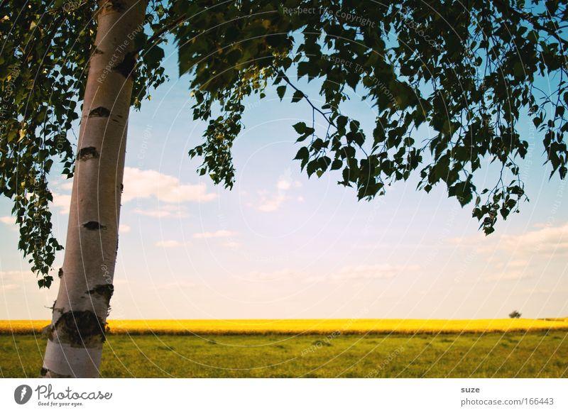 Naturfenster Umwelt Landschaft Pflanze Urelemente Himmel Wolken Sommer Klima Schönes Wetter Baum Gras Nutzpflanze Birke Rapsfeld Wiese Feld Stadtrand Blick