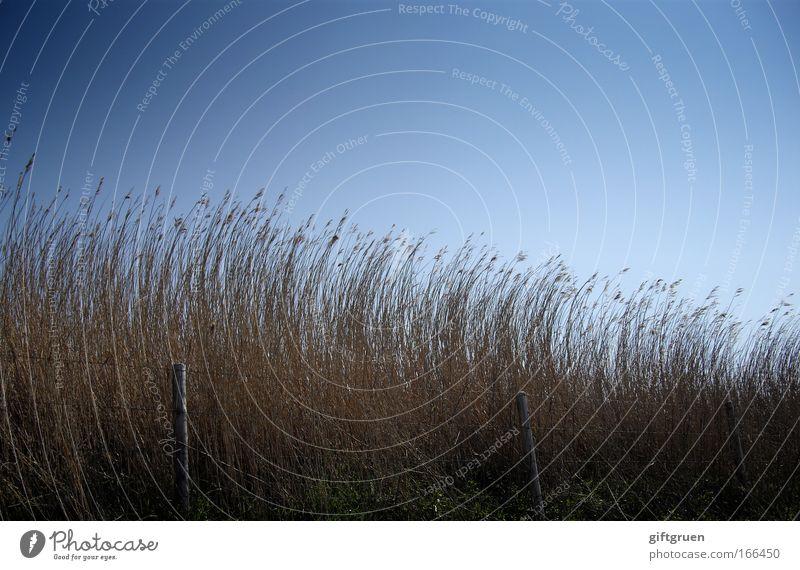 precisely nothing Himmel Natur blau Sommer Umwelt dunkel Landschaft Herbst Gras Schönes Wetter Weide Zaun Grasland Wolkenloser Himmel himmelblau aufstrebend
