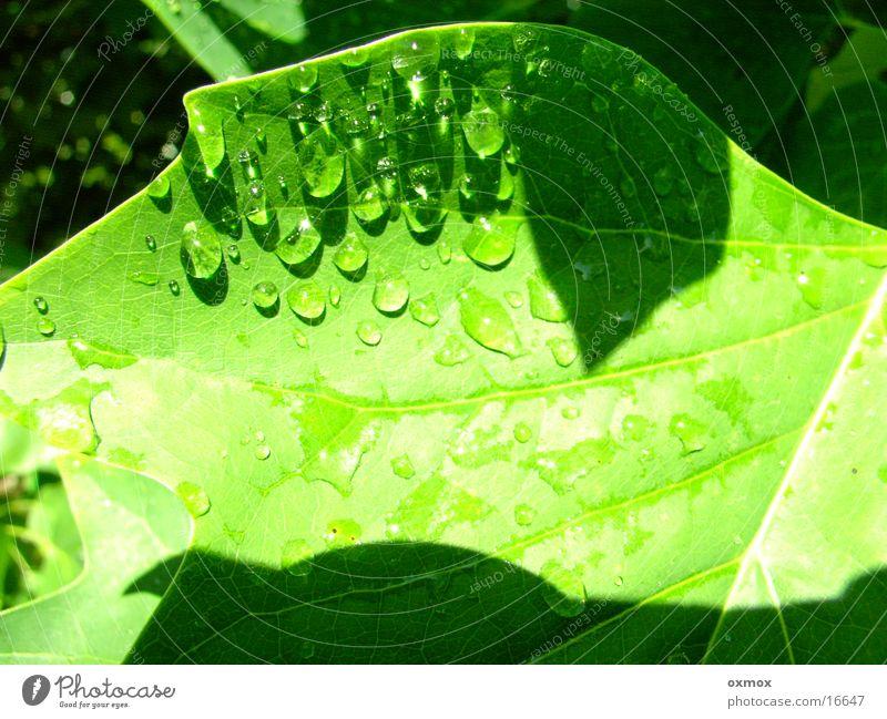 raindrops Wasser Regen glänzend