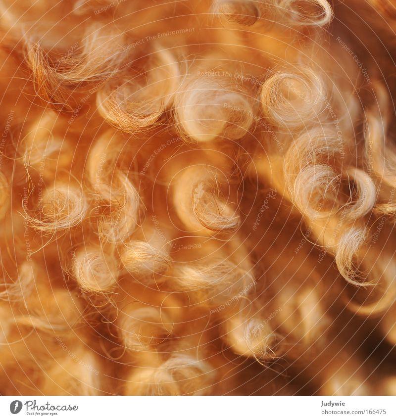 Lockig Hund Tier Haare & Frisuren braun wild natürlich Fröhlichkeit Wachstum Warmherzigkeit weich Lebensfreude Friseur Haustier Tierliebe rebellisch Haarbürste