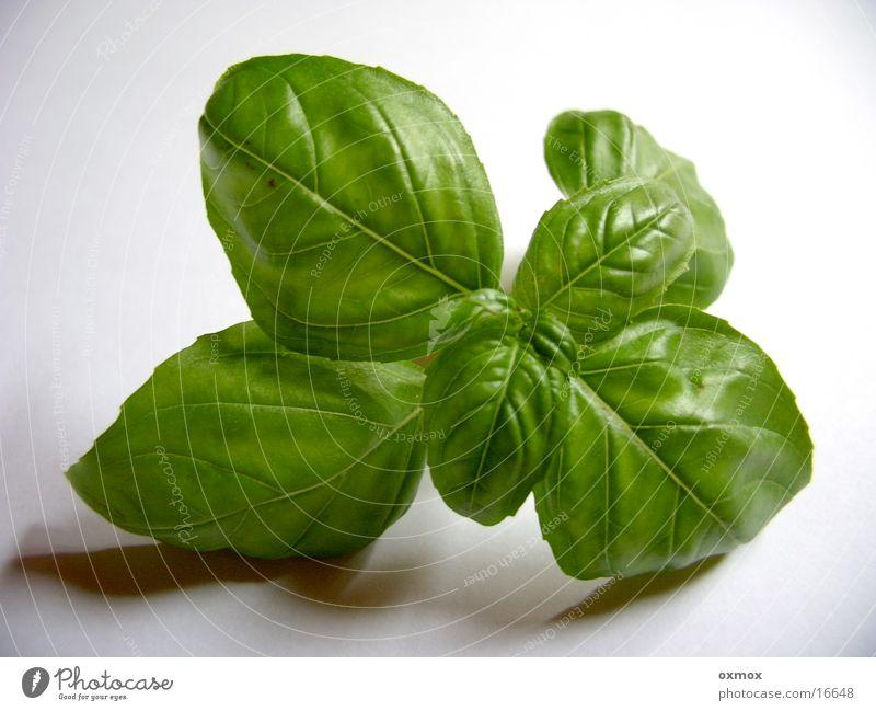 Basilikum / Basil Italien Kräuter & Gewürze kochen & garen Küche Pesto grün Blatt Ernährung Gemüse Vegetarische Ernährung herbs basil cooking kitchen