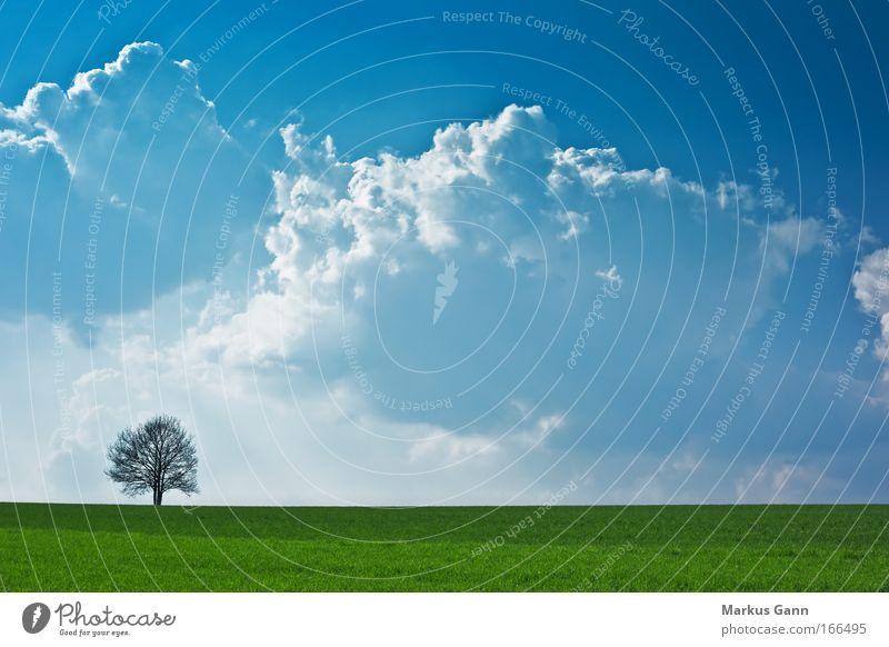 Einsamer Baum im Licht Farbfoto Außenaufnahme Menschenleer Textfreiraum Mitte Tag Kontrast Silhouette Gegenlicht Zentralperspektive Natur Landschaft Luft Himmel