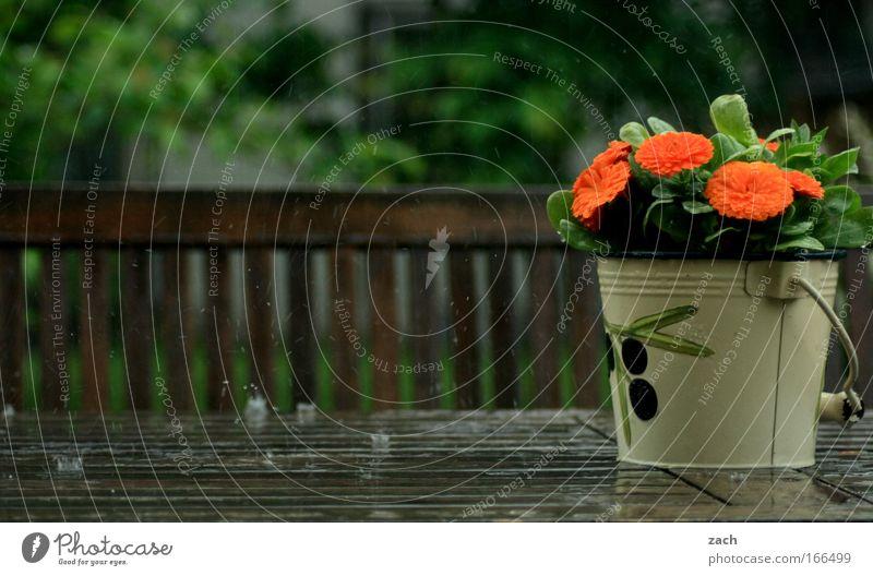 Frühlingsregen Wasser Baum Blume Pflanze Haus Blüte Garten Holz Regen Wohnung Wetter Wassertropfen nass Tisch frisch Sträucher