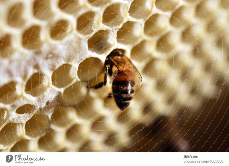 Es gibt immer etwas zu tun... Natur Tier Tierjunges Essen Bewegung Lebensmittel Freiheit fliegen Arbeit & Erwerbstätigkeit Freizeit & Hobby Verkehr Ernährung