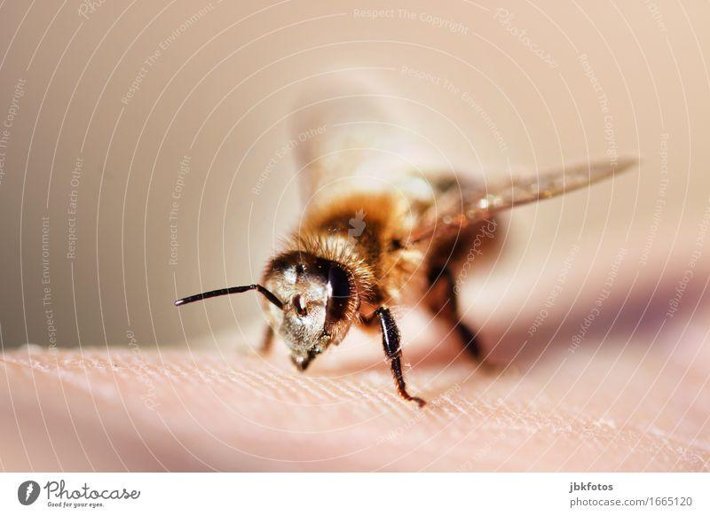 bitte nicht stechen schön Hand Tier Umwelt Auge Beine Lebensmittel Haare & Frisuren Ernährung ästhetisch Haut Flügel einzigartig Insekt trendy Biene