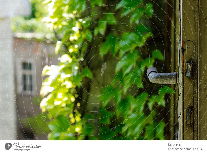 Wohnen im Grünen Farbfoto Außenaufnahme Menschenleer Textfreiraum links Kontrast Sonnenlicht Schwache Tiefenschärfe Häusliches Leben Wohnung Tür Efeu