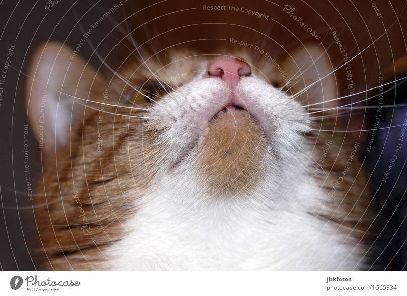 Genießen / ein Katzenleben muss toll sein Umwelt Natur Tier Haustier Tierjunges ästhetisch sportlich schön genießen Kraulen Schnurrhaar Tiergesicht grinsen