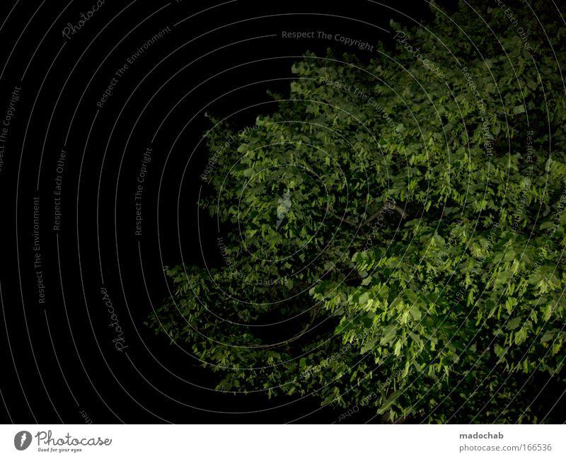 Es grünt so grün, wenn mado's Blitze glühn Menschenleer Hintergrund neutral Nacht Blitzlichtaufnahme Umwelt Natur Pflanze Nachthimmel Baum Grünpflanze schwarz