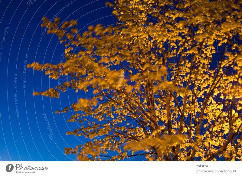 Das Licht der Nacht Farbfoto Außenaufnahme Experiment abstrakt Textfreiraum links Textfreiraum rechts Abend Dämmerung Kunstlicht Kontrast Langzeitbelichtung