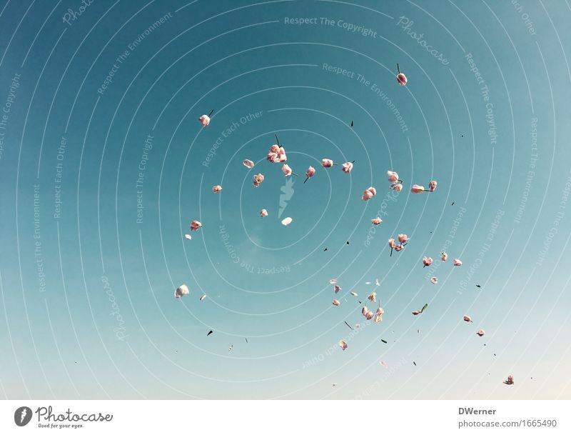 Tulpenregen elegant Freiheit Sommer Garten Umwelt Natur Pflanze Urelemente Himmel Wolkenloser Himmel Klima Schönes Wetter Blume Grünpflanze werfen natürlich