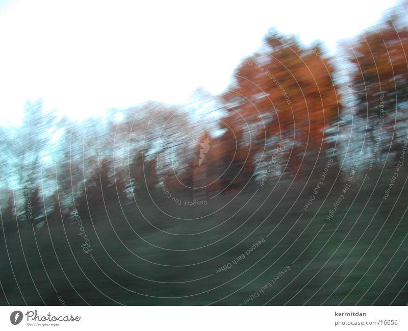 herbstklar Baum kalt Herbst Geschwindigkeit Autobahn Abendsonne