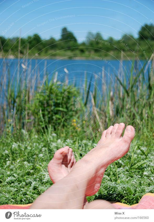 am See Wasser Ferien & Urlaub & Reisen Sonne Sommer ruhig Erholung Landschaft Wiese Beine Fuß Park Zufriedenheit Freizeit & Hobby Insel Schönes Wetter