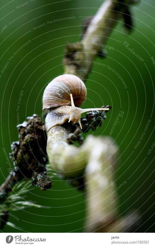 Der Weg ist das Ziel Baum Pflanze ruhig Einsamkeit Tier braun Idylle Wildtier Schnecke schleimig