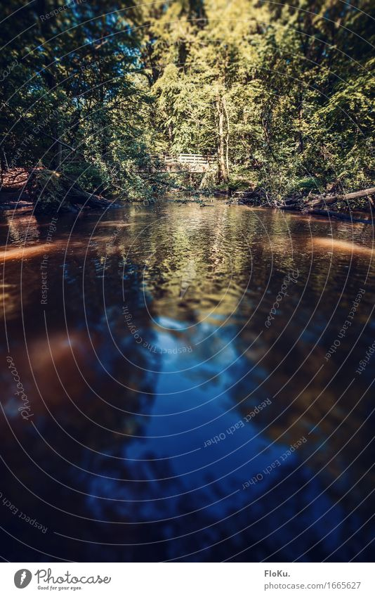 Sommerbach Ferien & Urlaub & Reisen Ausflug Abenteuer Expedition Camping wandern Umwelt Natur Landschaft Wasser Sonne Sonnenlicht Schönes Wetter Baum Wald