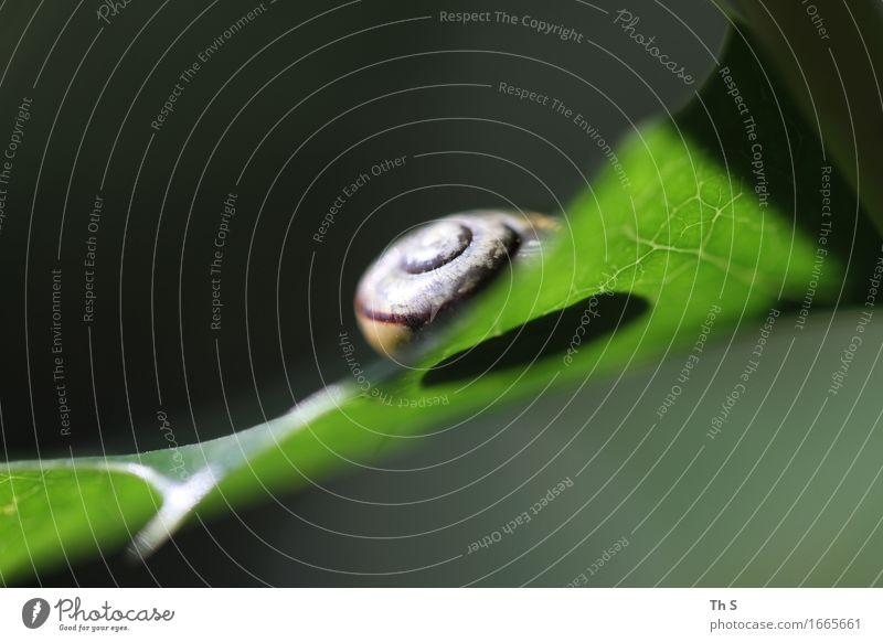 Schneckenhaus Umwelt Natur Pflanze Frühling Sommer Blatt Häusliches Leben ästhetisch authentisch einfach elegant natürlich grün Gelassenheit geduldig ruhig