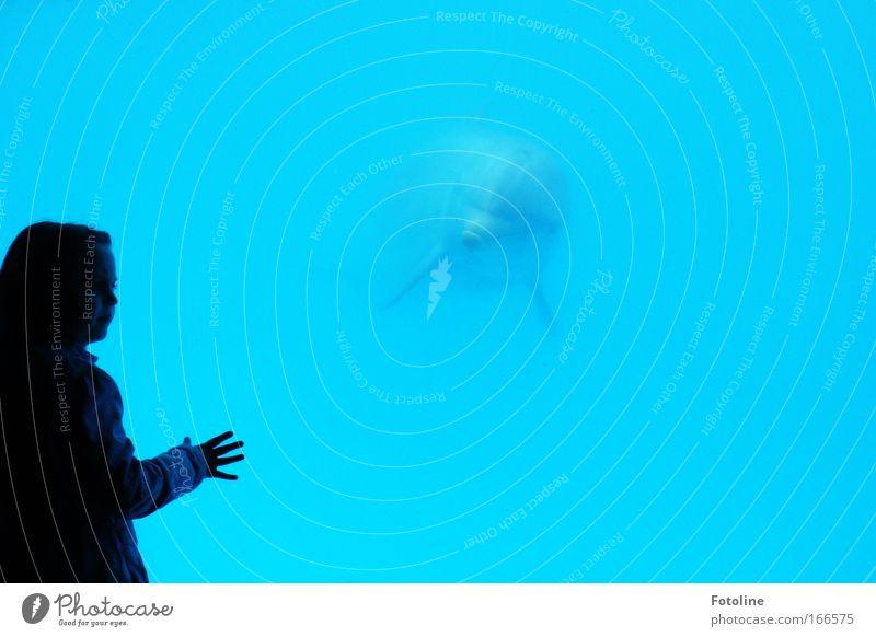 Wie ein Traum Farbfoto mehrfarbig Innenaufnahme Unterwasseraufnahme Textfreiraum rechts Hintergrund neutral Tag Kunstlicht Schatten Kontrast Silhouette Totale