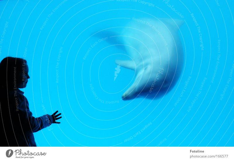 Begegnung Mensch Natur Wasser blau Hand schön Meer Freude Tier Bewegung Mund Arme elegant Schwimmen & Baden Nase Finger