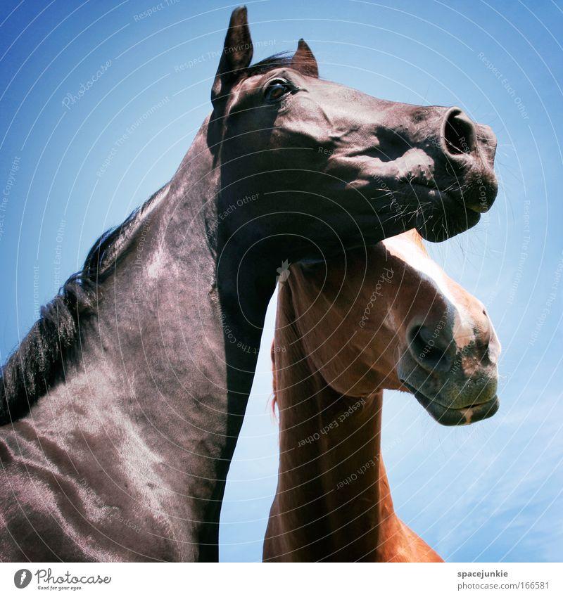 Love etc Farbfoto Außenaufnahme Reiten Tier Pferd 2 Tierpaar berühren Zusammensein genießen elegant Vertrauen Geborgenheit Warmherzigkeit Liebe Tierliebe