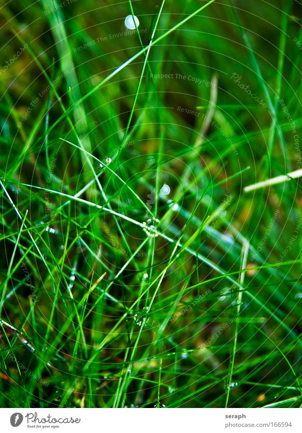 Gras Schilfrohr biotope blades of grass detail grass country Natur Blume Wiese blur herb Pflanze Umwelt Blühend pflanzlich Wind Hintergrundbild Biologie