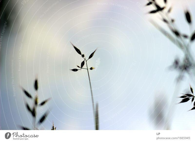 einfach Lifestyle Wellness Sinnesorgane Ferien & Urlaub & Reisen Ausflug Umwelt Natur Pflanze Urelemente Frühling Sommer Herbst Schönes Wetter Nutzpflanze