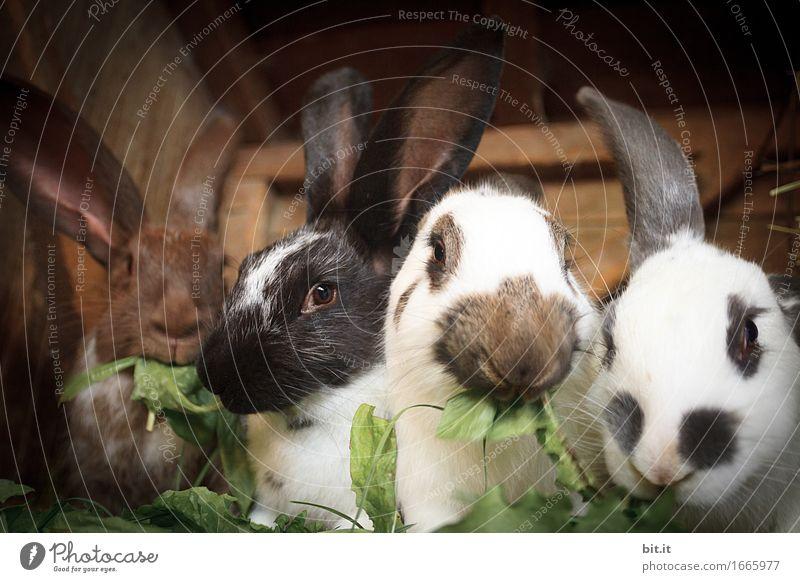 flauschig | Bio - Akkord Freizeit & Hobby Ferien & Urlaub & Reisen Garten Ostern Natur Tier Haustier Nutztier Fell Zoo Streichelzoo Tiergruppe Fressen weich