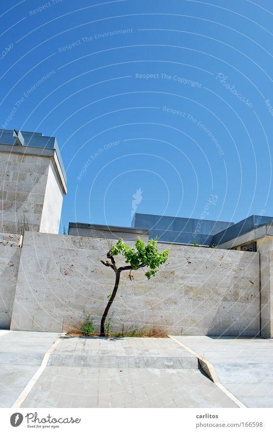 Der gute Wille zählt Baum blau kalt Wand Stein Mauer Gebäude Architektur Design elegant Erfolg Fassade Sicherheit modern Schutz