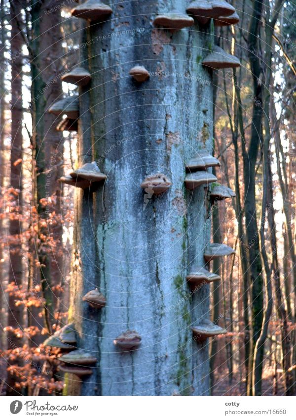Baumpilze 2 Wald Baumstamm