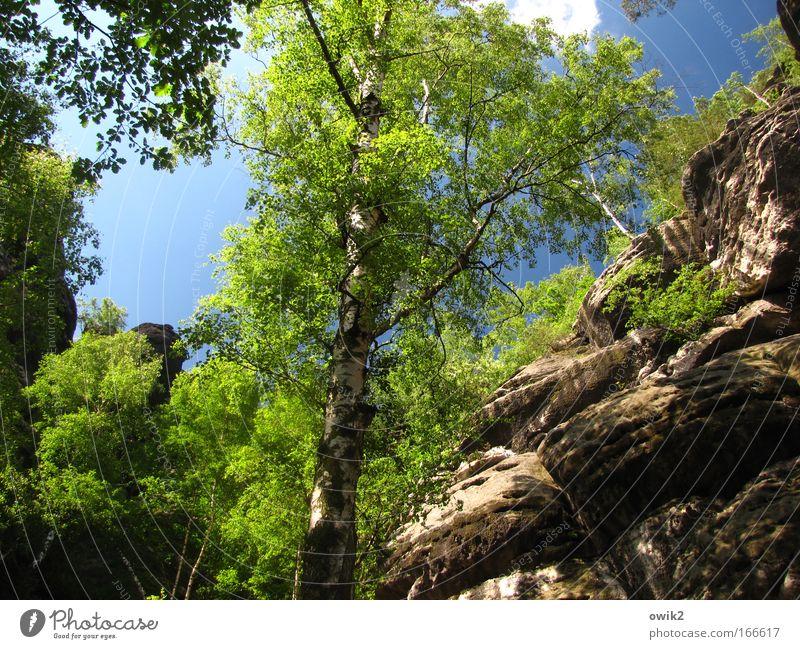 Elbsandstein Natur Himmel Baum grün blau Pflanze Wolken Wald Berge u. Gebirge Frühling Sand Landschaft hell Deutschland Umwelt