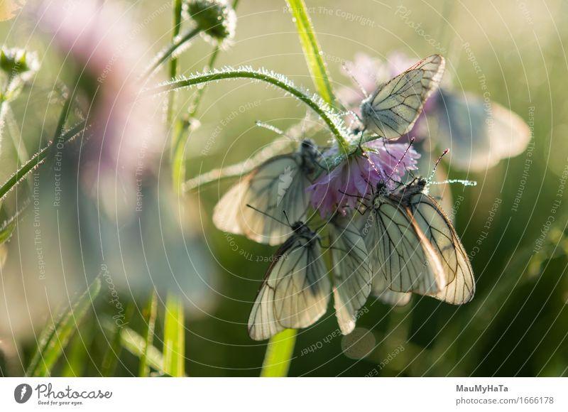 Natur Pflanze Sommer Sonne Blume Tier Gefühle Gras Glück Garten Park Feld Erde Wildtier Erfolg Fröhlichkeit