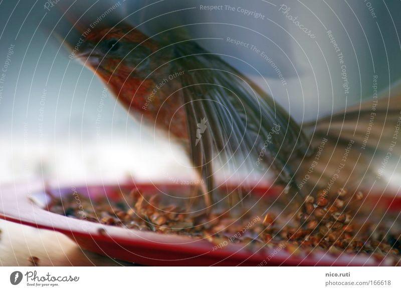 Und wer räumt auf? Dämmerung Bewegungsunschärfe Vogel Flügel fliegen Fressen füttern Tierliebe Solidarität Angst flüchten Getreide Unschärfe aufräumen
