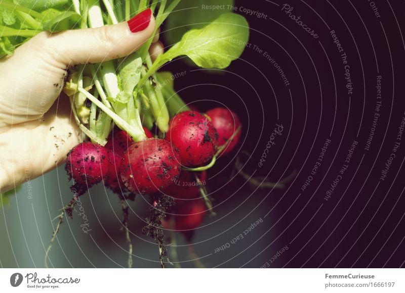 Knackig! Lebensmittel Ernährung Frühstück Abendessen Picknick Bioprodukte Vegetarische Ernährung Diät Fasten Fitness nachhaltig Natur Radieschen Ernte Erde Hand