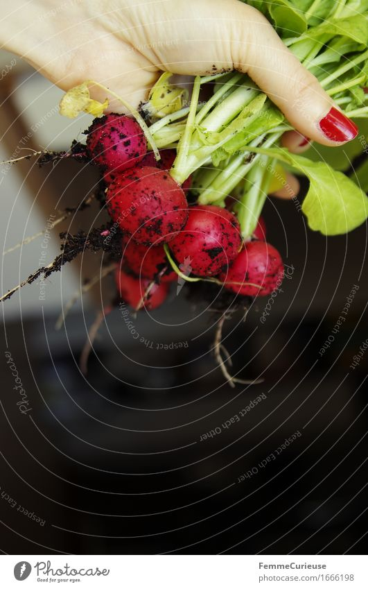 Eigener Anbau! :-) Lebensmittel Ernährung Abendessen Büffet Brunch Picknick Bioprodukte Vegetarische Ernährung Diät Fasten Natur Radieschen Aussaat Ernte Wurzel