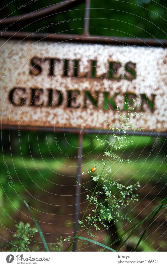 wichtige Lebenszeit Trauerfeier Beerdigung Sommer Gras Park Friedhof Tür Marienkäfer 1 Tier Metall Rost Schriftzeichen Schilder & Markierungen Blühend