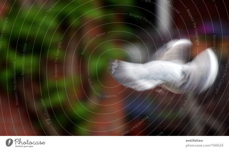 ... und ACTION! Natur schlechtes Wetter Pflanze Mauer Wand Tier Taube Flügel 1 fliegen Geschwindigkeit braun mehrfarbig grau grün Kraft Farbfoto Außenaufnahme