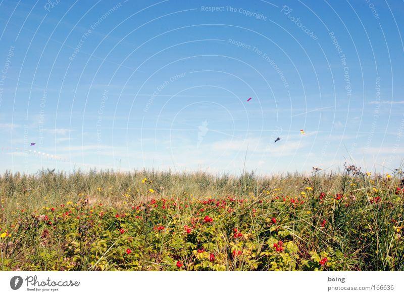 Seilhüpfen Wind Lenkdrachen Rose Beeren Hagebutten Drachenfliegen